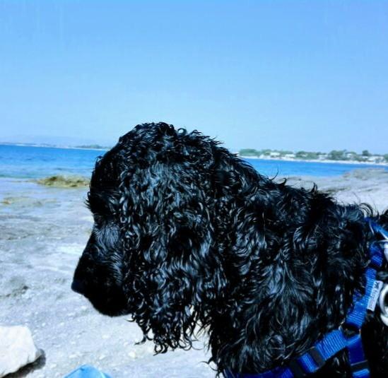 Marley in spiaggia, pettorina Ferlplast