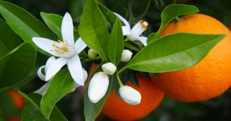 Bagnodoccia Paglieri ai Fiori di Sakura, Narciso e Fiori di Arancio