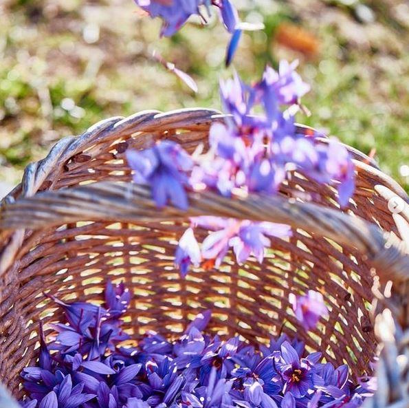 Proprietà fiori di zafferano nei trattamenti cosmetici Sisley Paris per la pelle secca